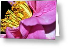Pink Camellia And Stamen Greeting Card