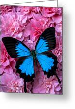 Pink Camilla And Blue Butterfly Greeting Card