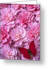 Pink Camilla's And Red Butterfly Greeting Card by Garry Gay