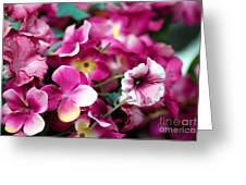 Pink Canvas Flora Greeting Card