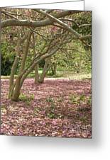 Pink Carpet In The Forrest Greeting Card