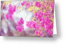 Pink Cascade Of Bougainvillea Greeting Card