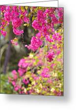 Pink Cascade Of Bougainvillea. Vertical Greeting Card