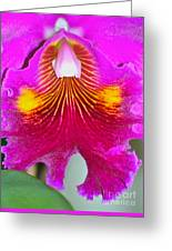Pink Cattelaya Orchid Greeting Card
