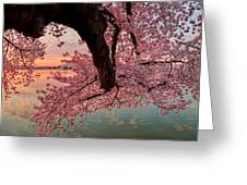Pink Cherry Blossom Sunrise Greeting Card