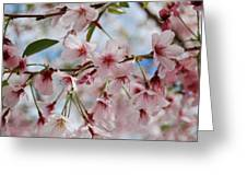 Pink Cherry Blossoms Greeting Card