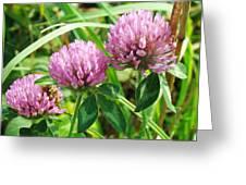 Pink Clover Wildflower - Trifolium Pratense Greeting Card