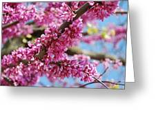 Pink Cluster Flowers Greeting Card
