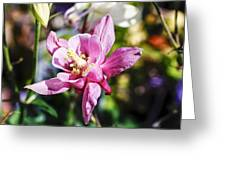 Pink Columbine Greeting Card