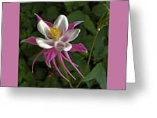 Pink Columbine Flower Greeting Card