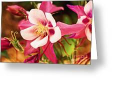 Pink Columbines Greeting Card