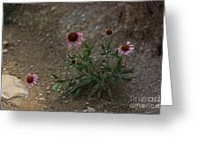 Pink Cone Flower's Close Up In A Road Greeting Card