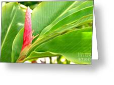 Pink Cone Ginger Bud Greeting Card