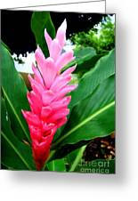 Pink Cone Ginger Greeting Card