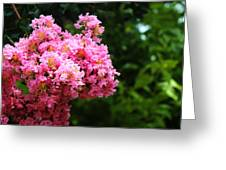 Pink Contrast Greeting Card