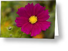 Pink Cosmos 3 Greeting Card by Roger Snyder
