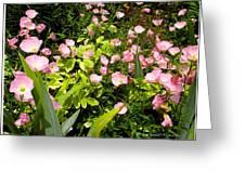 Pink Cosmos Swirl Greeting Card