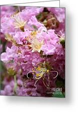 Pink Crepe Myrtle Closeup Greeting Card