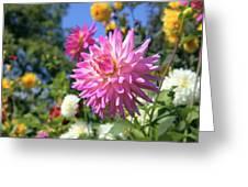 Pink Dahlia Flower Closeup Greeting Card