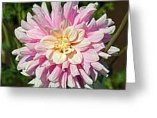 Pink Dahlia Flower Greeting Card