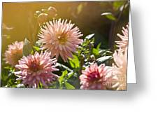 Pink Dahlia Garden Greeting Card
