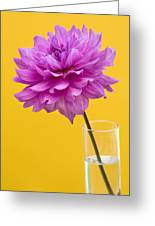 Pink Dahlia In A Vase Against Yellow Orange Background Greeting Card