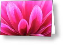 Pink Dahlia Petals Abstract Greeting Card