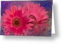 Pink Daisies Abstract Greeting Card