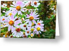 Pink Daisies Flowers Greeting Card
