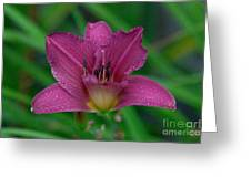 Pink Daylily Greeting Card by Kimberly Ayars