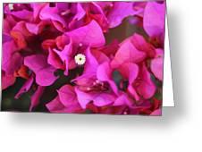 Pink Del Rio Greeting Card