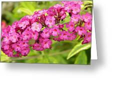 Pink Delphinium Greeting Card