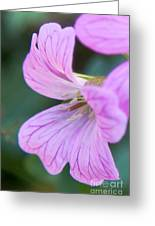 Pink Details Greeting Card by Chris Heitstuman