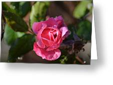 Pink Dew Greeting Card