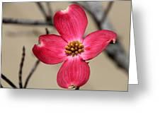 Pink Dogwood 5 Greeting Card