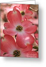 Pink Dogwood At Easter 2 Greeting Card