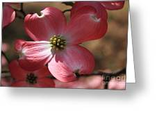 Pink Dogwood At Easter 4 Greeting Card