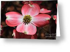 Pink Dogwood At Easter 5 Greeting Card