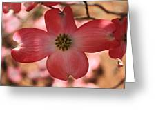 Crown Of Thorns Pink Dogwood At Easter 8 Greeting Card