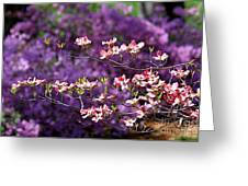 Pink Dogwood With Purple Azaleas Greeting Card