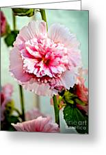 Pink Double Hollyhock Greeting Card by Robert Bales