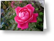 Pink Double Rose Greeting Card