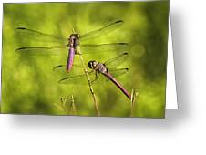 Pink Dragonflies Greeting Card