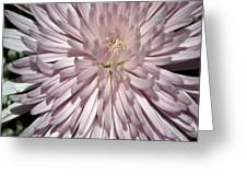 Pink Duvet Cover Greeting Card
