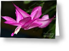 Pink Easter Cactus Greeting Card