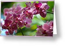 Pink Elegance Greeting Card