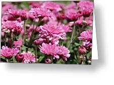 Pink Etc. Greeting Card