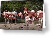 Pink Falmingos At The San Diego Zoo Greeting Card