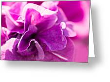 Pink - Featured 3 Greeting Card