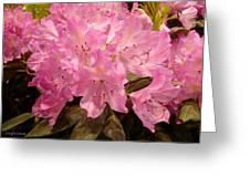 Pink Fiesta Greeting Card
